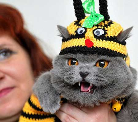 عکسهای جذاب,تصاویر جالب,دوستداران گربه