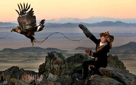 عکسهای جالب,عکسهای جذاب,عقاب طلایی