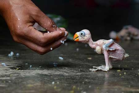 عکسهای جالب,تصاویر دیدنی,بچه طوطی