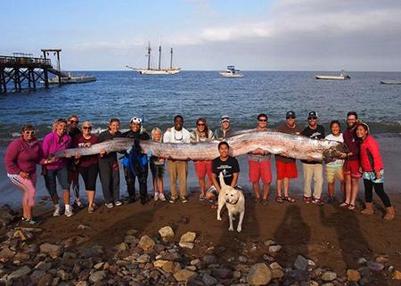 عکسهای جالب,تصاویر دیدنی,ماهی بزرگ