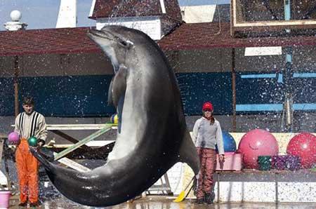 عکسهای جالب,تصاویر دیدنی,آموزش دلفین