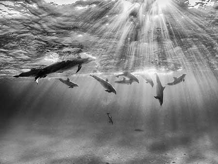 تصاویر دیدنی,تصاویر جالب,شنای دلفین ها