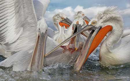 عکسهای جالب,تصاویر جالب,ماهیگیری
