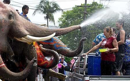 تصاویر دیدنی,تصاویر جالب,فیل های تایلندی
