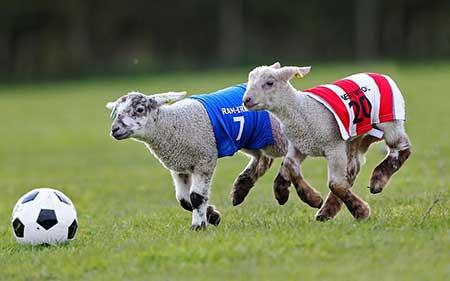 عکسهای جالب,تصاویر دیدنی,مسابقات لیگ برتر