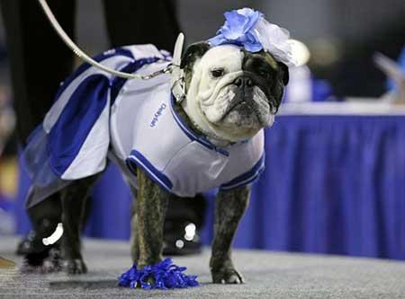 تصاویر دیدنی,تصاویر جالب,مسابقات بهترین لباس سگ