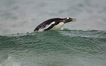 عکسهای جالب,تصاویر دیدنی,پنگوئن