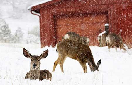 تصاویر دیدنی,تصاویر جالب,بارش برف