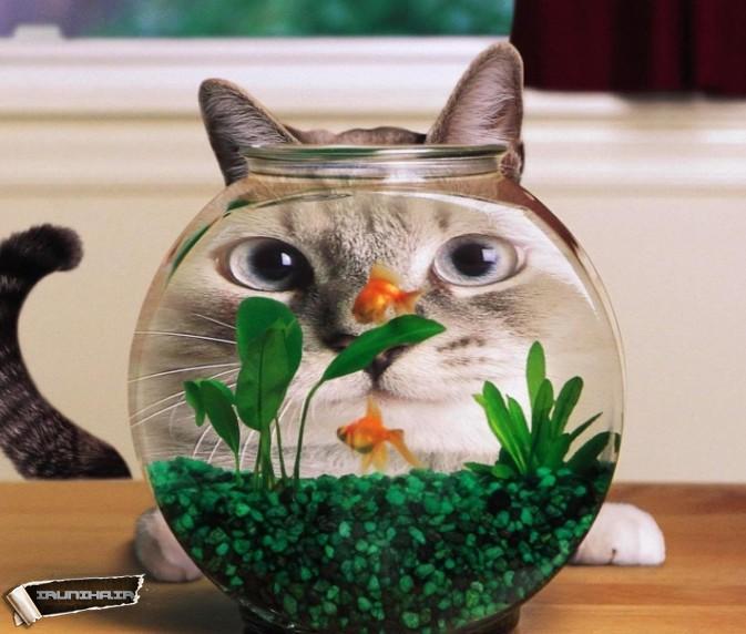 عکس بسیار خنده دار ,  عکس خنده دار گربه ای