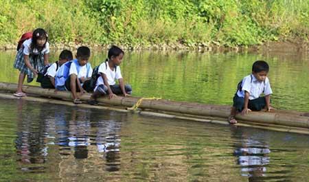 عکسهای جالب,چوب بامبو,تصاویر دیدنی