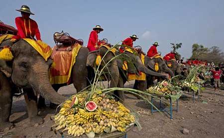 عکسهای جالب,تصاویر دیدنی,فیل
