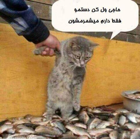 عکس های خنده دار گربه ای - حتما ببینید!!!